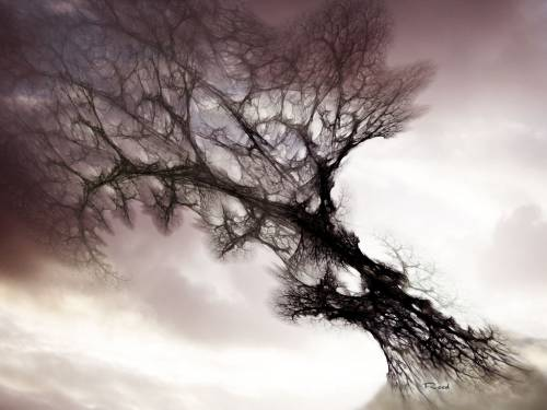 Dramatic sky over lonely dead tree Art nature | Stock Photo ...