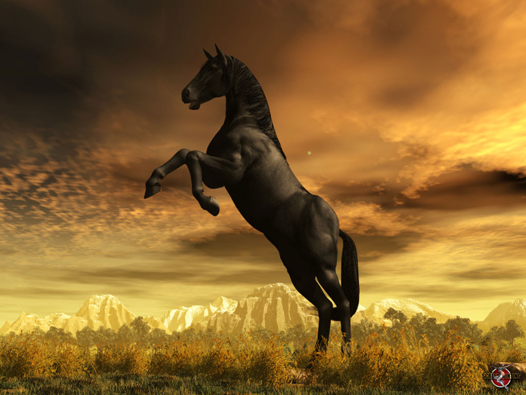 Wallpaper Image The Black Nature 3D Digital Art Horse Creature Stallion
