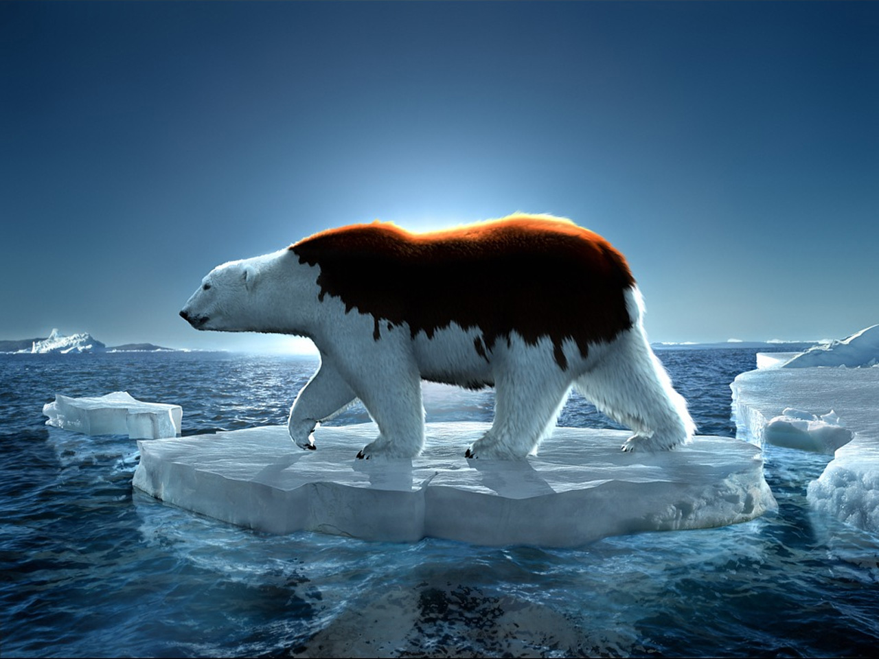 greenpeace polar bear 1280 x 960pix wallpaper nature 3d. Black Bedroom Furniture Sets. Home Design Ideas