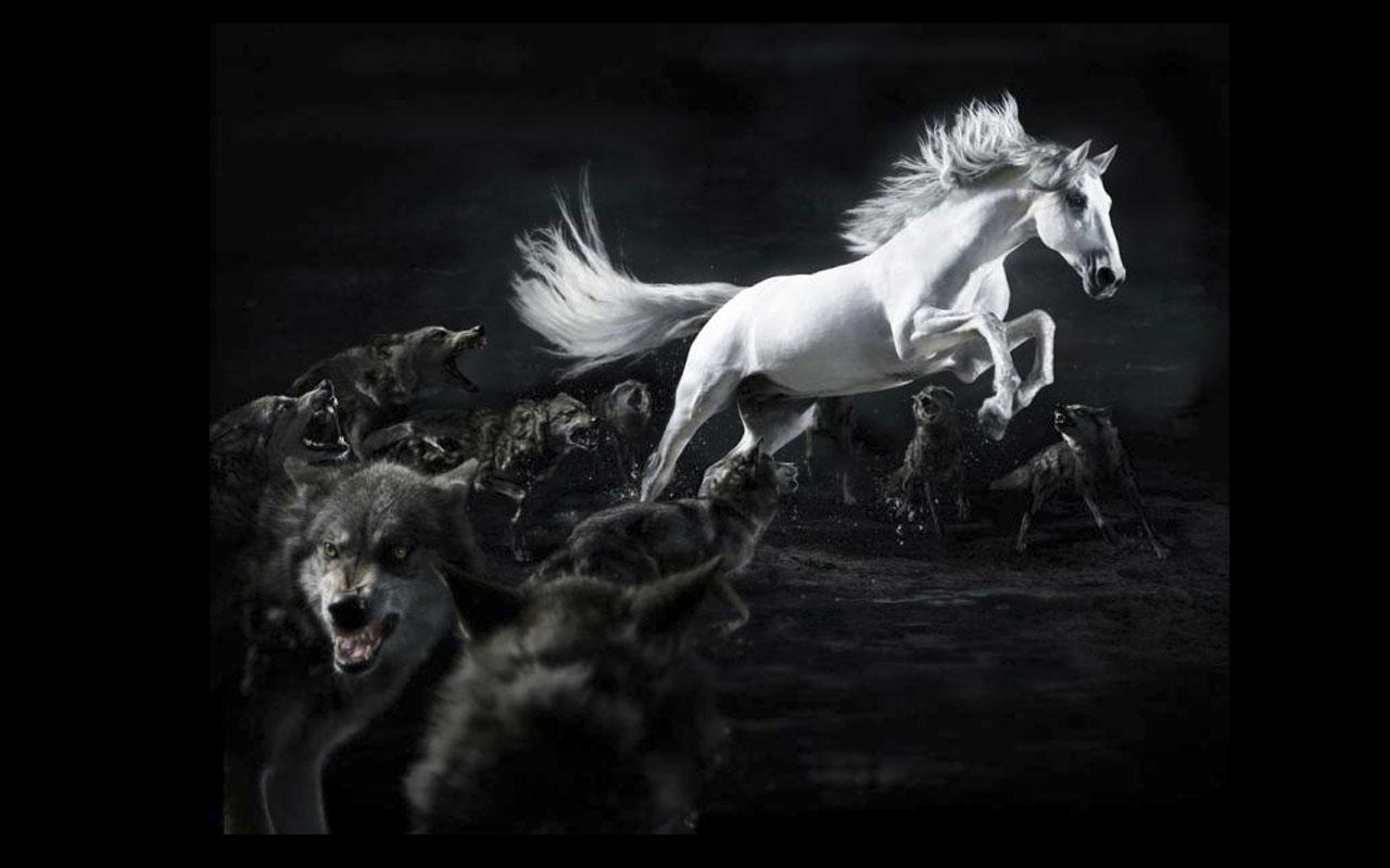 Pin Horse 3d Wa...